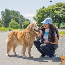 Dog day care services in London