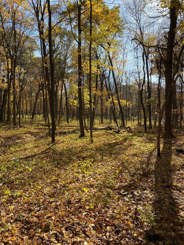 Ryerson Woods Forest Preserve: 21950 N Riverwoods Rd, Riverwoods, IL