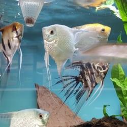 Aquariums by JJ - (New) 18 Photos - Local Fish Stores - 55