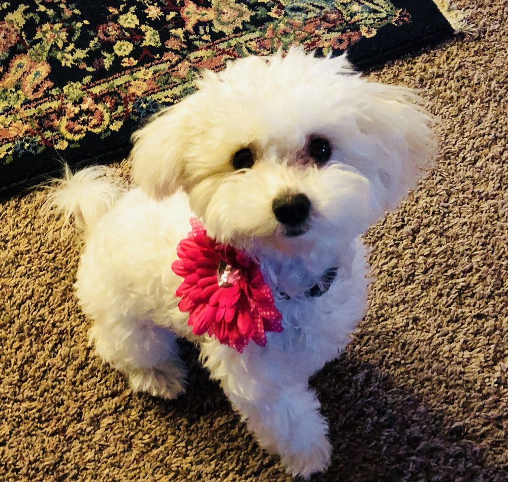 Love On A Leash Dog Grooming Salon: 10220 29th St E, Edgewood, WA