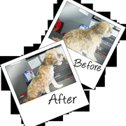Pet heroes dog grooming 13 photos 15 reviews pet groomers aldo photo of pet heroes dog grooming el paso tx united states solutioingenieria Gallery