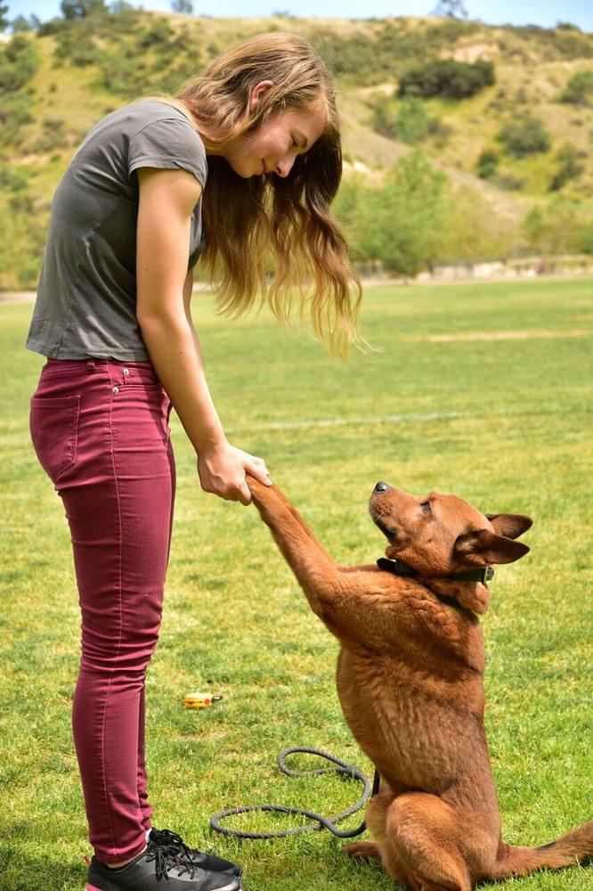 Crimson Dog Ranch: Gaston, OR