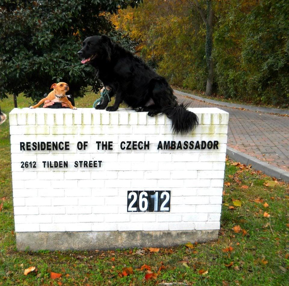 Community At Embassy Park Dc Pool: Embassy Of Czech Republic