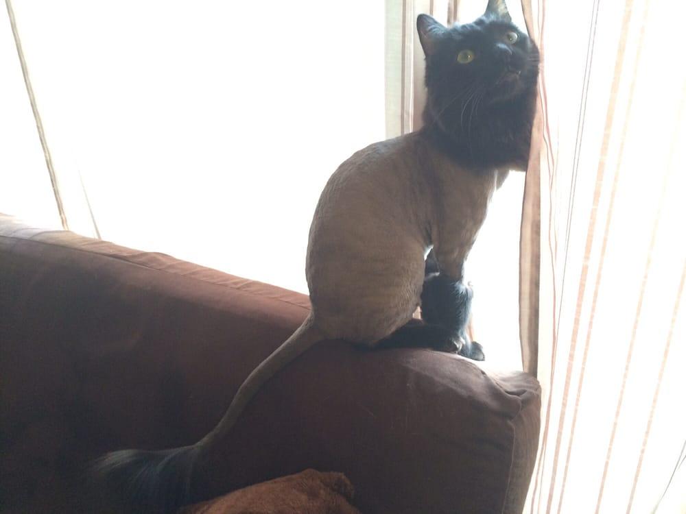 Yelp Best Little Cat House