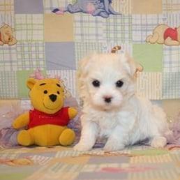 Sandhills Puppy Paws - 14 Photos - Pet Breeders - 601 4th St