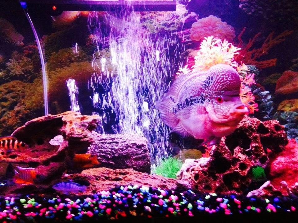 Oranda Aquarium 28 Photos 83 Reviews Aquarium