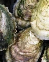 Santelle's Seafood: 8275 Carolina Blvd, Clyde, NC