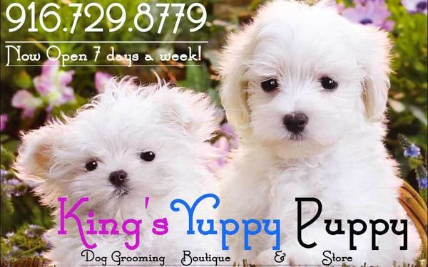 King's Yuppy Puppy: 3933 N Country Dr, Antelope, CA