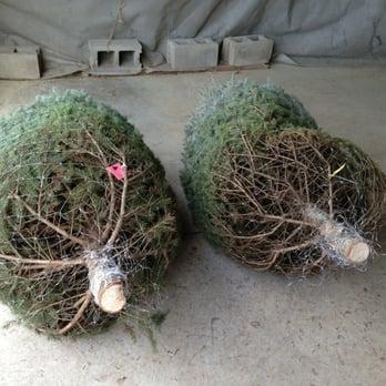 Photo Of Stumpfu0027s U Cut Christmas Tree Farm   Cedarburg, WI, United States