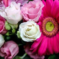 Vanessa's Flowers