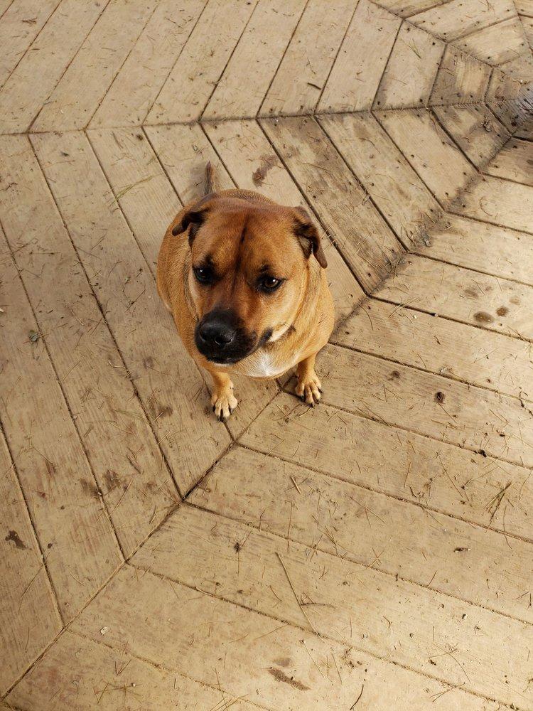 Cochran Hill Dog Run