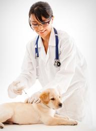 Hammond Pet Hospital: 1309 169th St, Hammond, IN