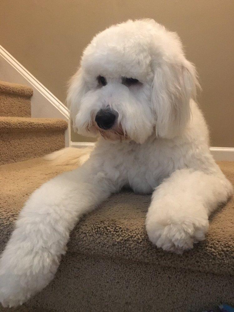 Dog Grooming Huntersville