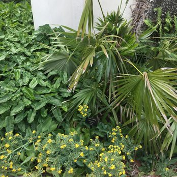 Miami Beach Botanical Garden - 434 Photos & 69 Reviews - Botanical ...