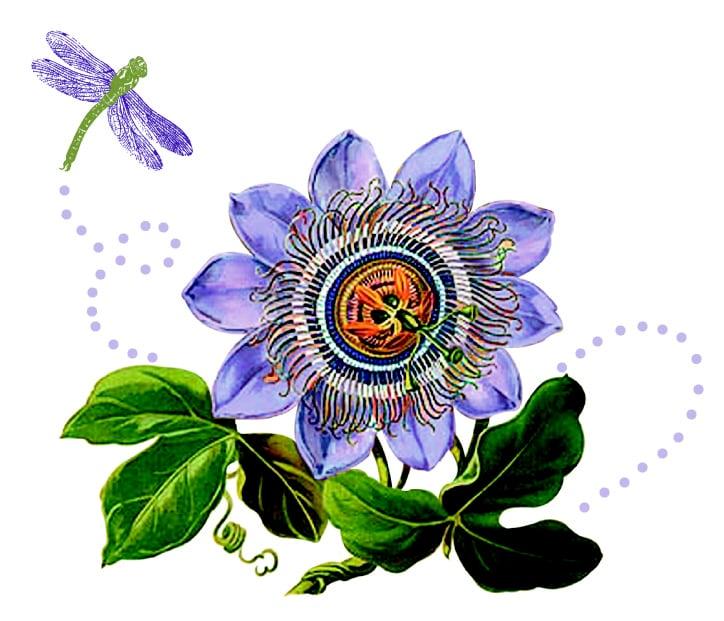 Passion Flower Design: 7611 Concord Dr, Boulder, CO