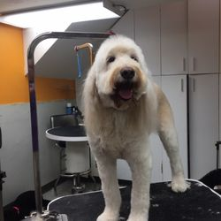 A Cut Above Grooming Salon 16 Photos 55 Reviews Pet Groomers