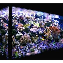 Champion Aquariums 39 Photos Aquarium Maintenance