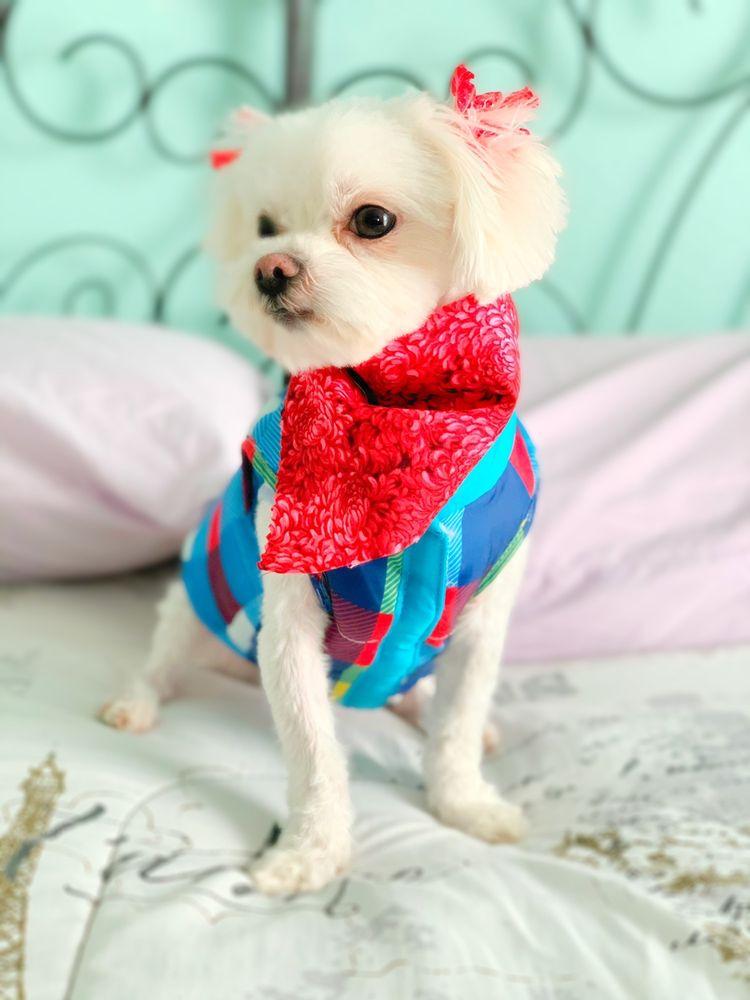 The dogSpaw: 1120 E Bardin Rd, Arlington, TX