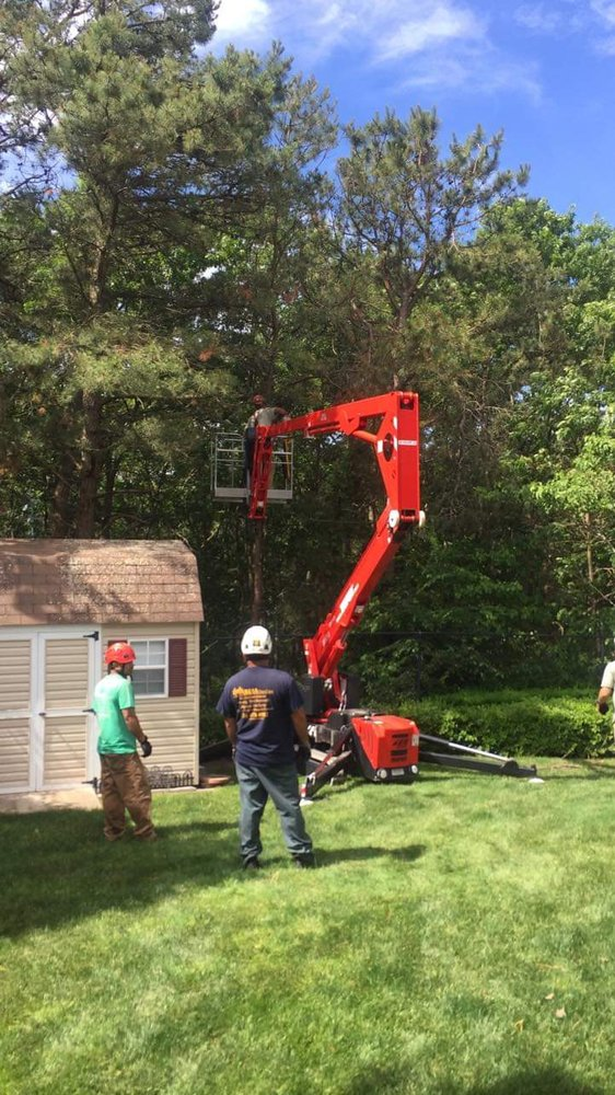 Okula Tree Care: 190 Frowein Rd, Center Moriches, NY