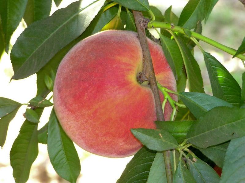 Bennett Orchards: 31442 Peach Tree Ln, Frankford, DE