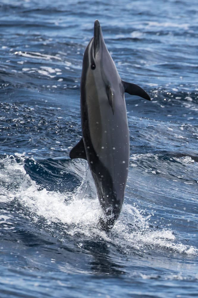 Photo Of Newport Landing Whale Watching And Sportfishing Beach Ca United States