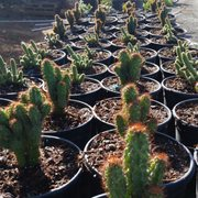 Photo Of La Vista Nursery Riverside Ca United States