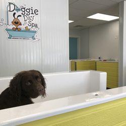 Doggie day spa grooming self serve salon 65 photos 36 reviews photo of doggie day spa grooming self serve salon columbus oh united solutioingenieria Images