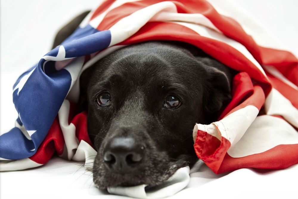 Dog Guard of Northeast Indiana: Ft. Wayne, IN