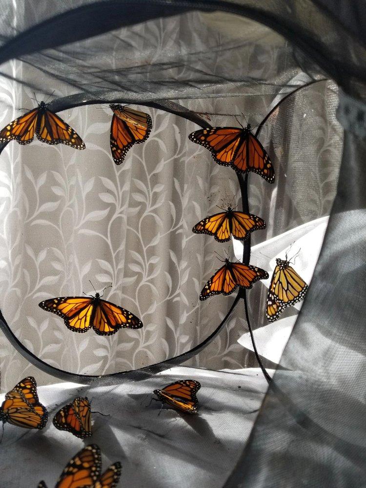 Eastern Monarch Butterfly Farm: 5643 Davison Rd, Clarence, NY