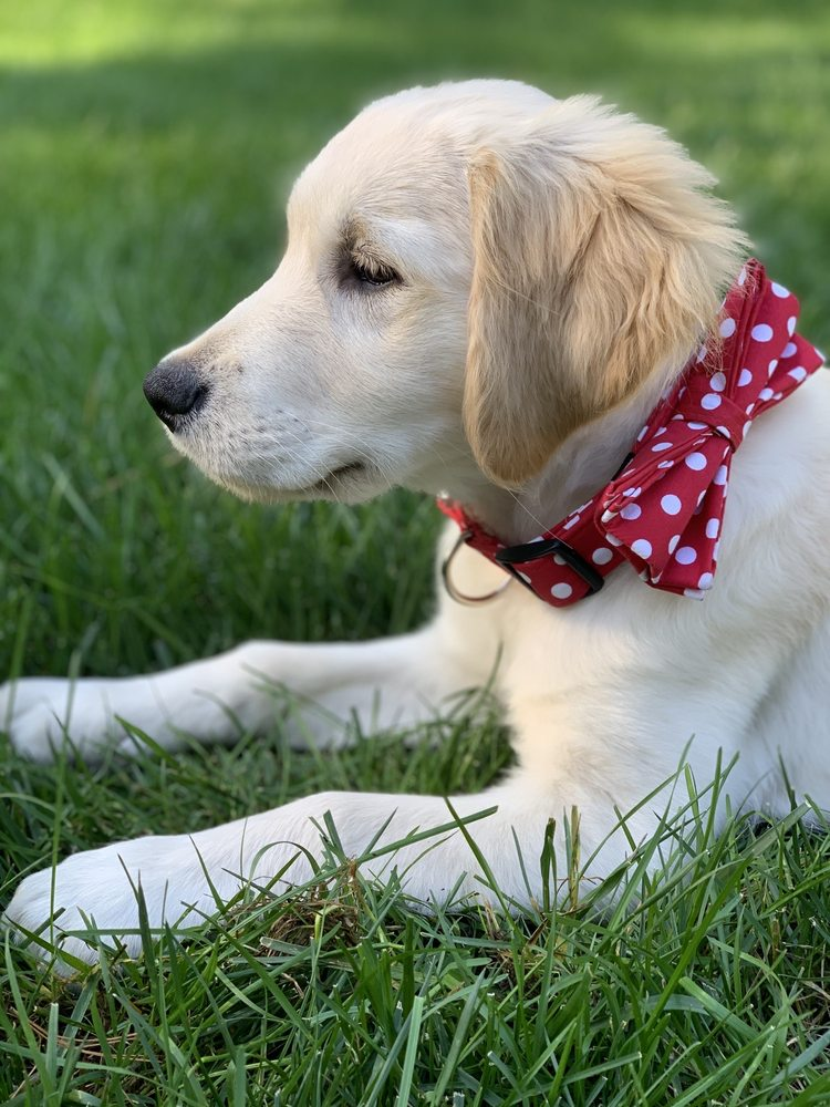 Dog Training Now: 317 S Roselle Rd, Schaumburg, IL