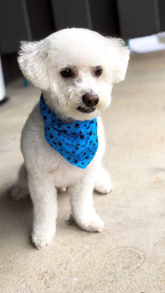 Mud Puppies: 12233 Fm 620 N, Austin, TX