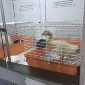 Petland - 181 Photos & 171 Reviews - Pet Shops - 4400