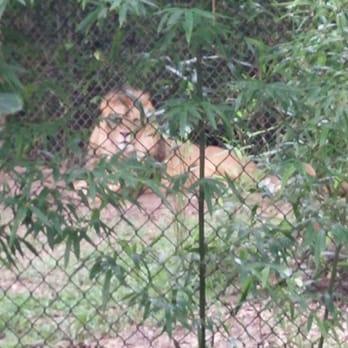 Zoosiana Zoo Of Acadiana 41 Photos 13 Reviews Zoos 5601