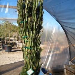 Photo Of Desert Gardens Nursery Glendale Az United States