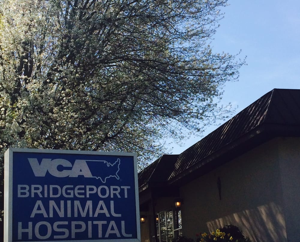 VCA Bridgeport Animal Hospital