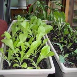 Organic Indoor Gardening Worm farms of minnesota llc 19 photos nurseries gardening photo of worm farms of minnesota llc new hope mn united states organic indoor gardening workwithnaturefo