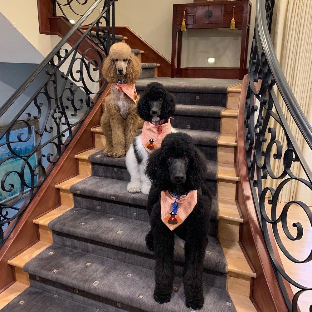 Dane's Dog Grooming: 2617 S Olathe Way, Aurora, CO