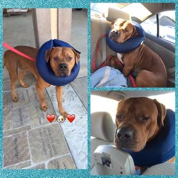 Dog Rescue Ventura County Ca