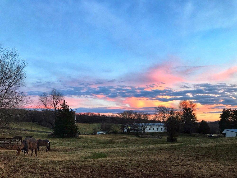 Ashland Equestrian: 8563 Lee Hwy, Warrenton, VA