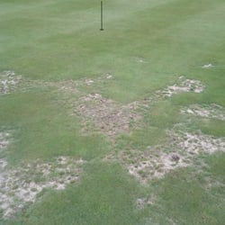 Yelp Reviews for Hampton Golf Club - 11 Reviews - (New) Golf - 2600