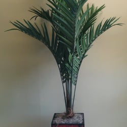 emerald silk plants - 11 photos - florists - 2701 n orange-olive rd 6 Foot Fake Plants