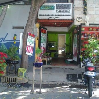 L casa del bonsai viveros y jardiner a xicot ncatl 380 for Viveros en queretaro