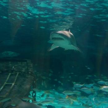Ripley S Aquarium Myrtle Beach 563 Photos 309 Reviews