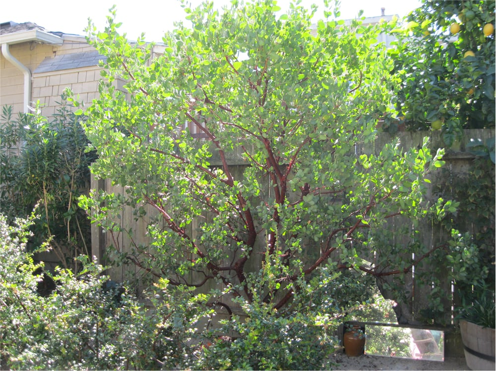 Poetree Landscapes & Arboriculture: 132 Winfield St, San Francisco, CA