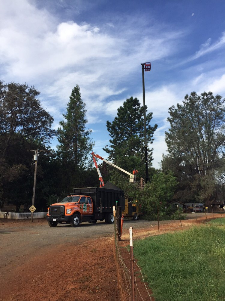 Big T's Tree Service: 358 Garden Hwy, Yuba City, MO