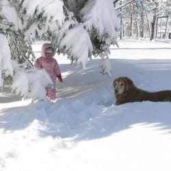 photo of dogwatch by c no pet fence long grove il united states
