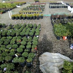Photo Of Sonoma Valley Whole Nursery Ca United States