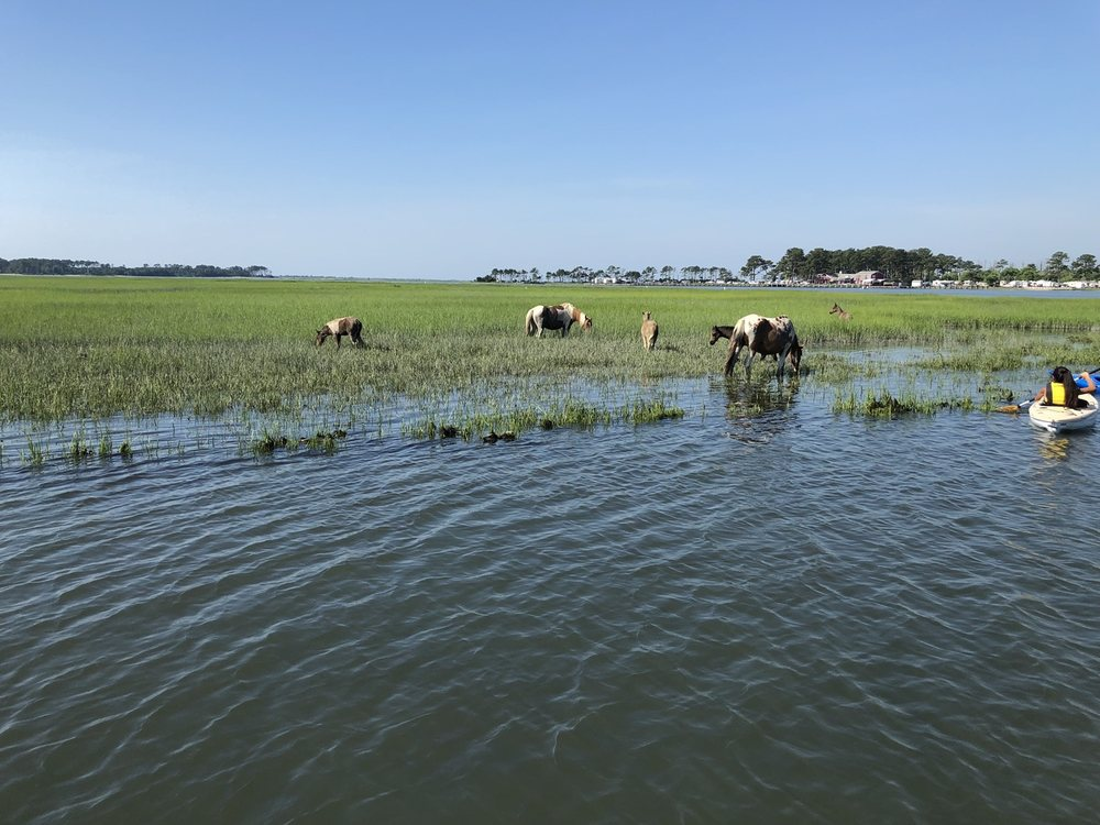 Salt Water Pony Tours: 2246 Curtis Merritt Harbor Dr, Chincoteague, VA