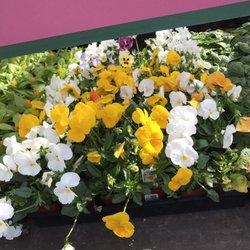 Armstrong Garden Centers 43 Photos 26 Reviews Nurseries