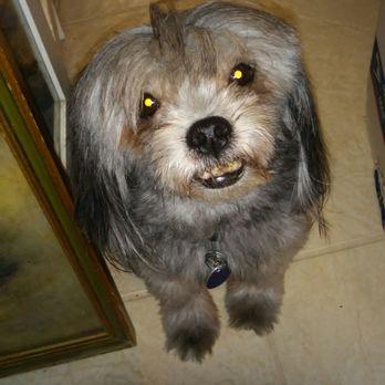 Animal Care Control Palm Beach County 14 Reviews Animal